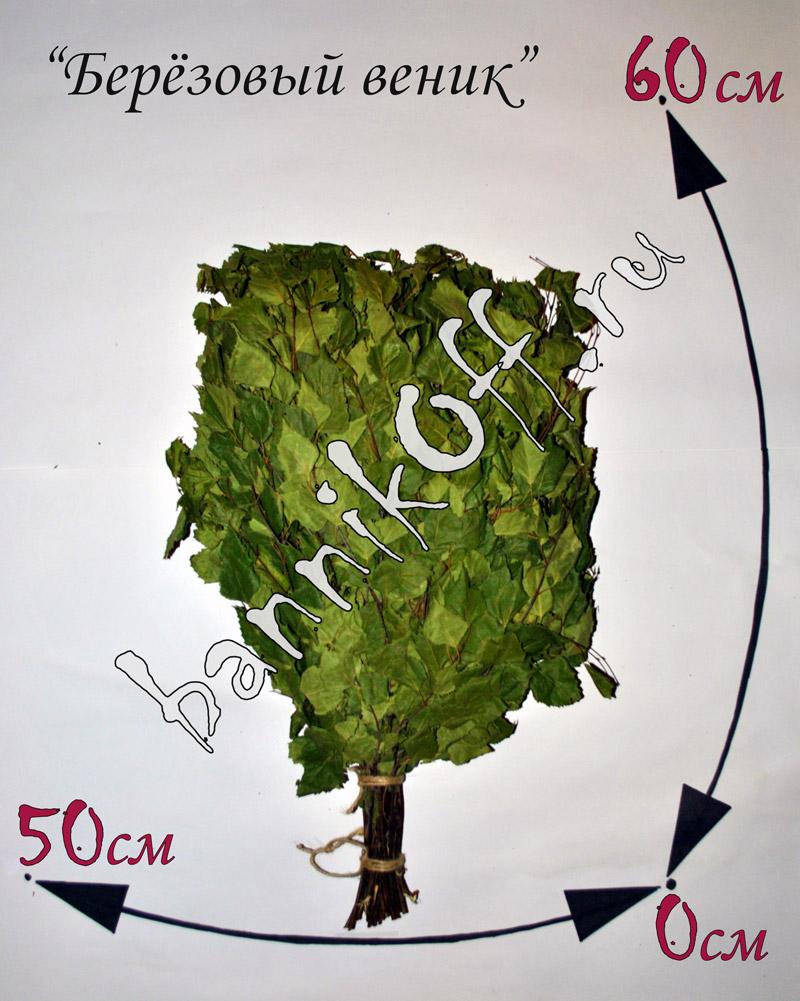 Жимолость выращивание уход 100